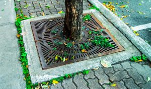 An urban tree and protective grate embedded in the sidewalk.