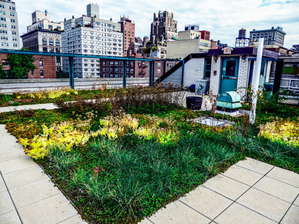 A views of a green roof with natural plantings, surrounded by taller buildings.