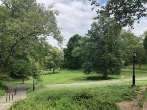 Green space in Central Park